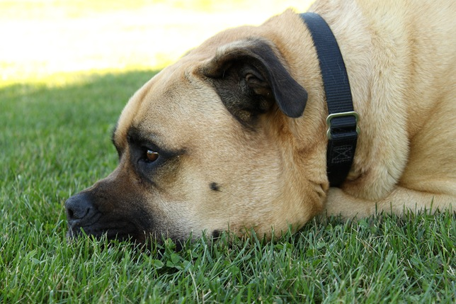 pensive Maximus