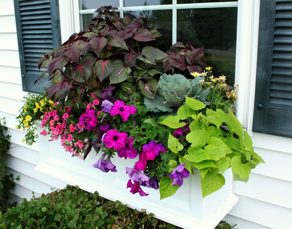 full sun window box