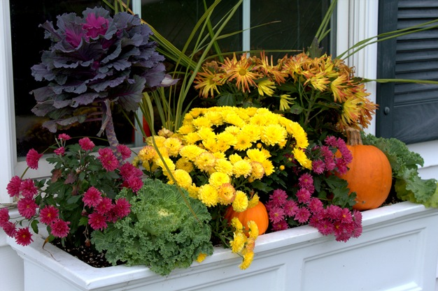 window box mums